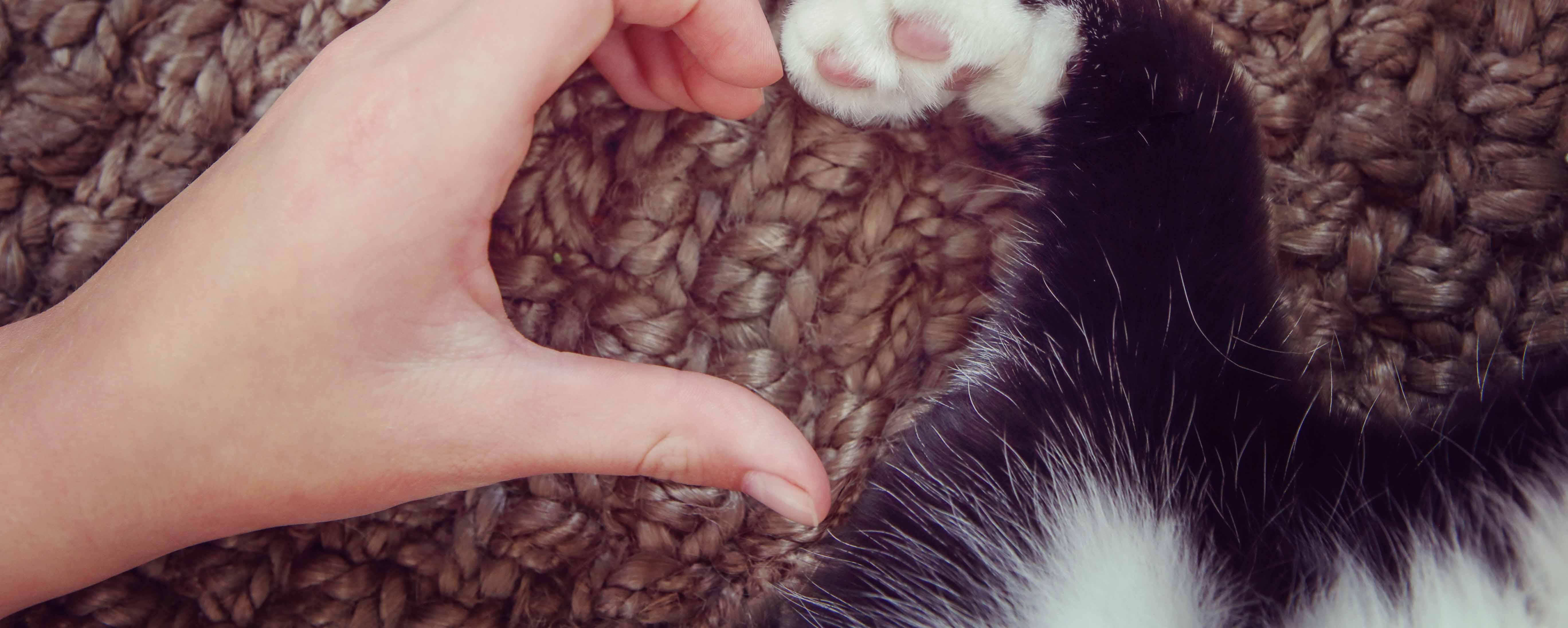 Sedating a cat before euthanasia debate