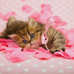 Kitten lying in pink rose petals