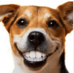 Dog smiling with teeth