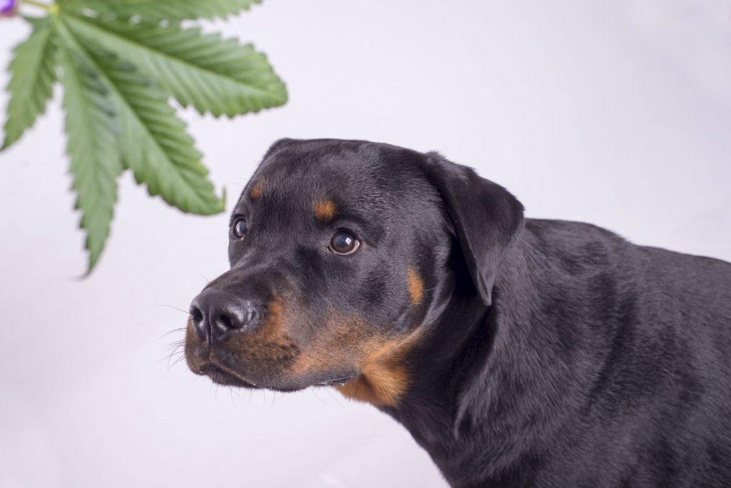 dog & Weed