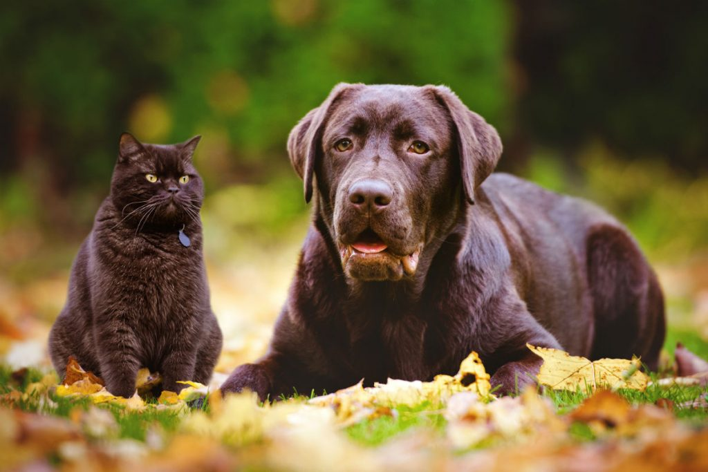 Brown cat and dog sitting in leaves