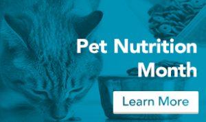 blog_nutrition_cat